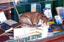 kalk-bay-sleeping-dog