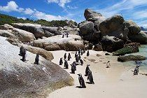 pinguine-boulders-beach-2