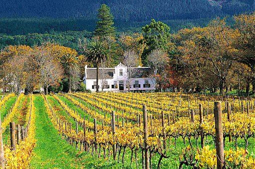 winelands-1