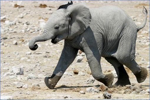 Elefanten  Tiere  Kapstadt in Sdafrika