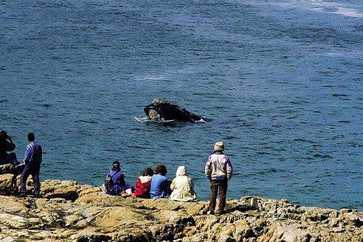 whale-watching-cape-town
