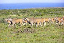 west-coast-national-park-tiere